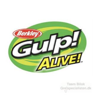 Gulp Alive